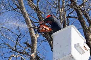 Lagage dufresne for Reglementation elagage des arbres
